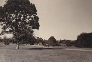 cubbon-park-bangalore-taken-in-the-1890s