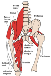 270px-anterior_hip_muscles_2