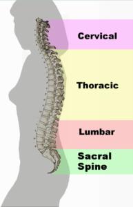 300px-spinal_column_curvature_2011